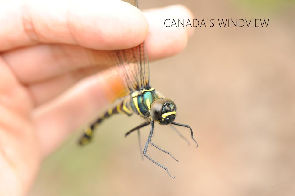 f:id:windview_canada:20210512225930j:plain