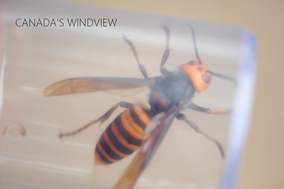 f:id:windview_canada:20210516182730j:plain
