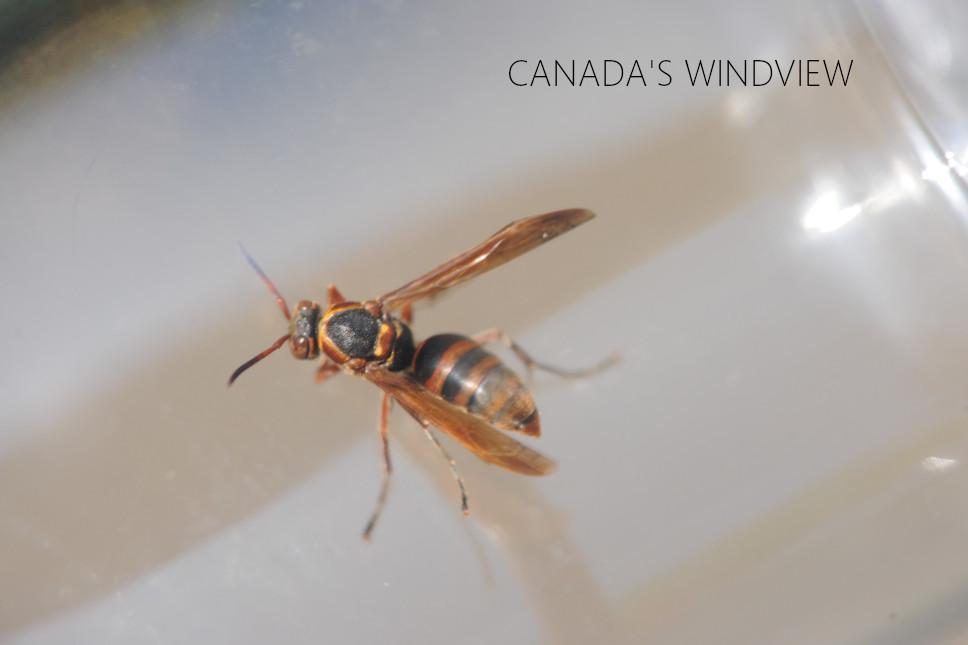 f:id:windview_canada:20210604212026j:plain