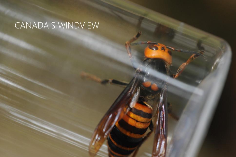 f:id:windview_canada:20210607225347j:plain