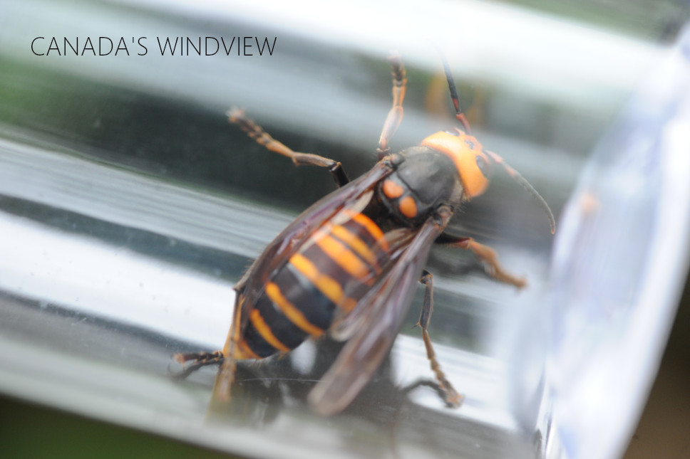 f:id:windview_canada:20210607225614j:plain