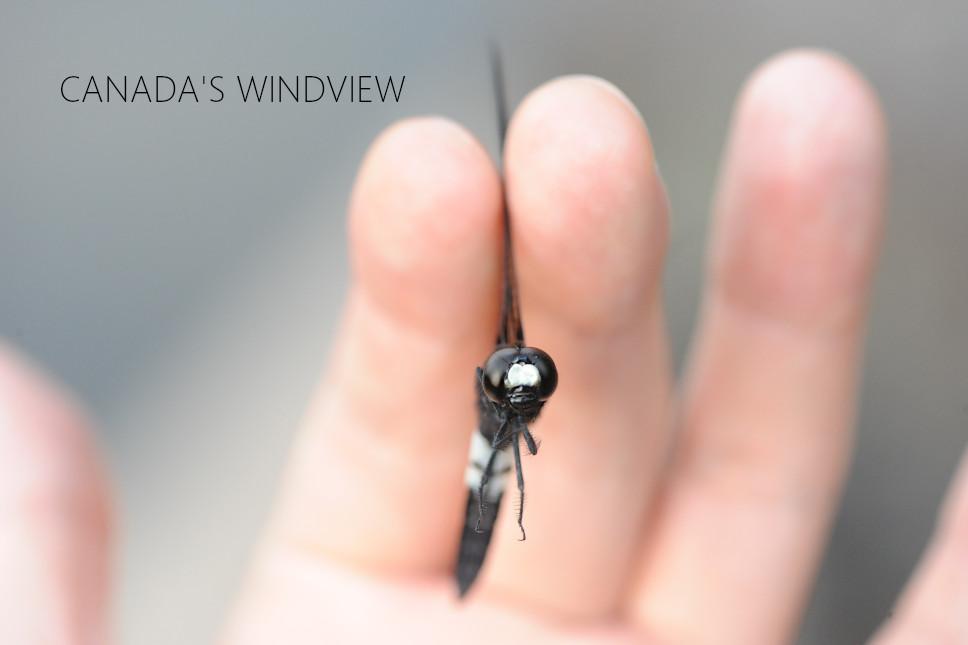 f:id:windview_canada:20210608220703j:plain