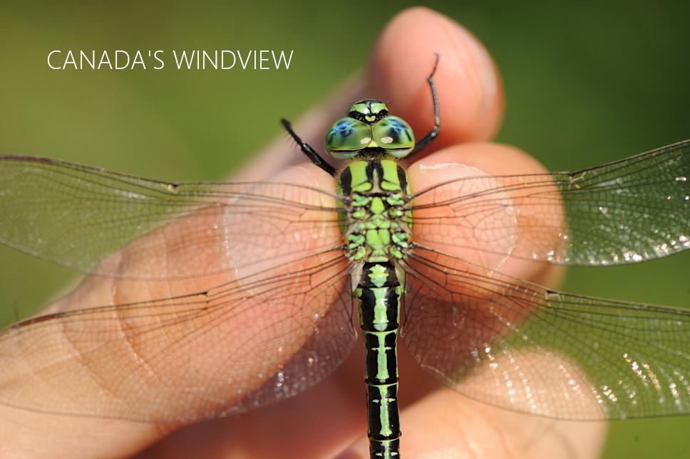 f:id:windview_canada:20210610222439j:plain