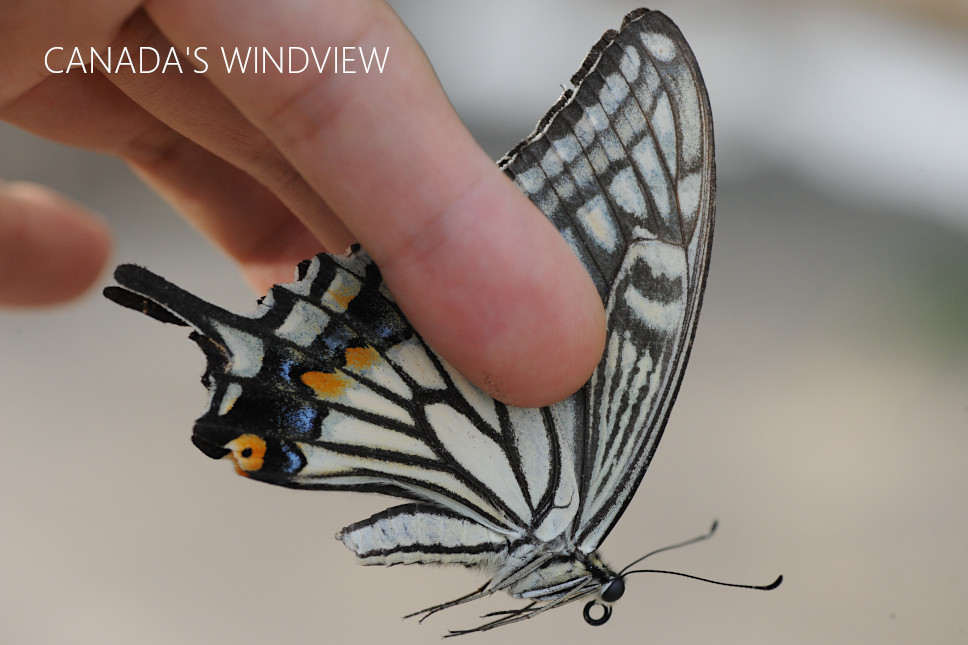 f:id:windview_canada:20210613204736j:plain