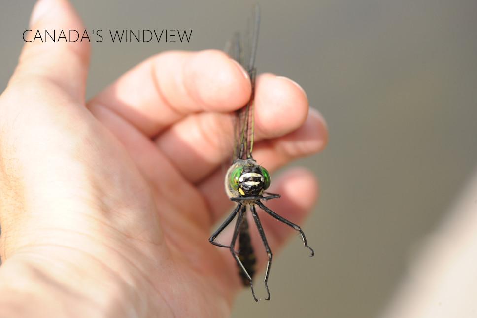 f:id:windview_canada:20210627184522j:plain