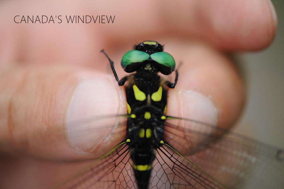 f:id:windview_canada:20210712211918j:plain