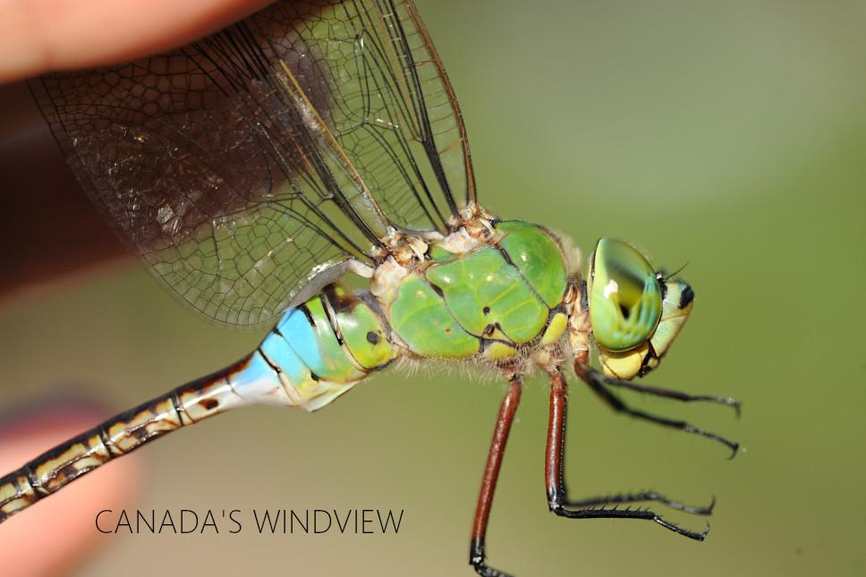 f:id:windview_canada:20210713215242j:plain