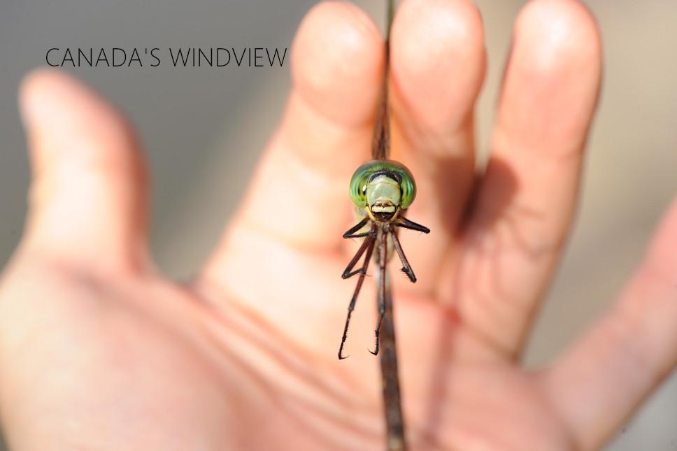 f:id:windview_canada:20210713215351j:plain