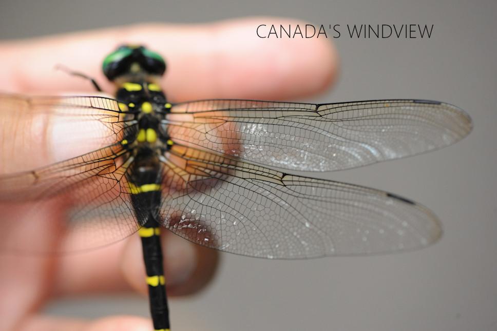 f:id:windview_canada:20210720192309j:plain
