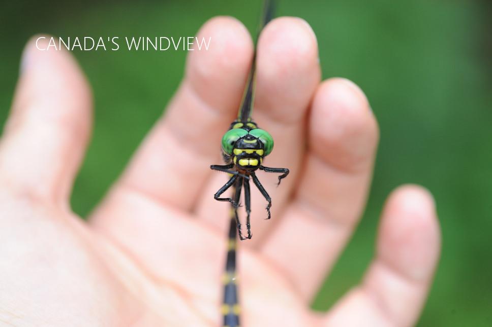 f:id:windview_canada:20210720200329j:plain