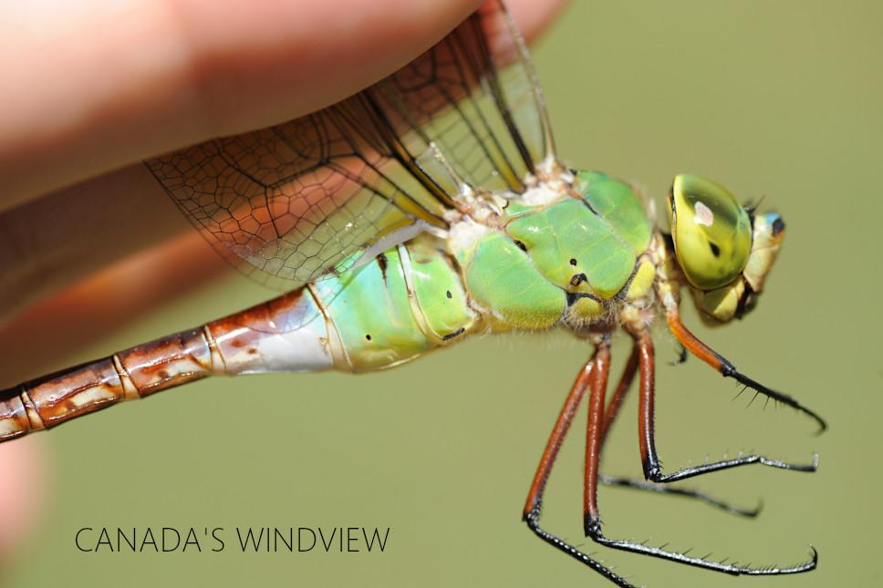 f:id:windview_canada:20210813100218j:plain