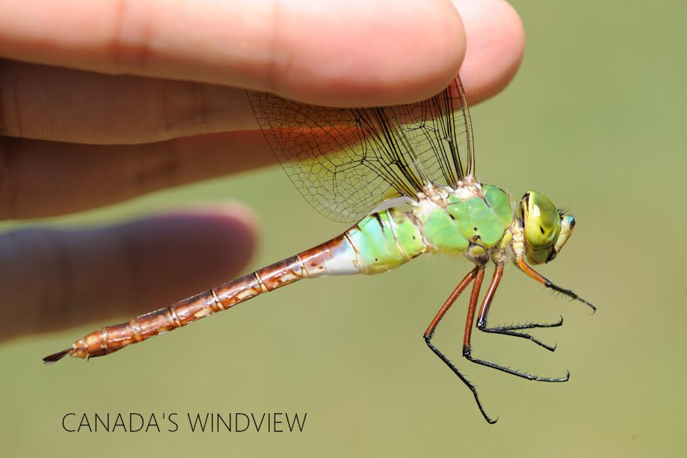 f:id:windview_canada:20210813101302j:plain