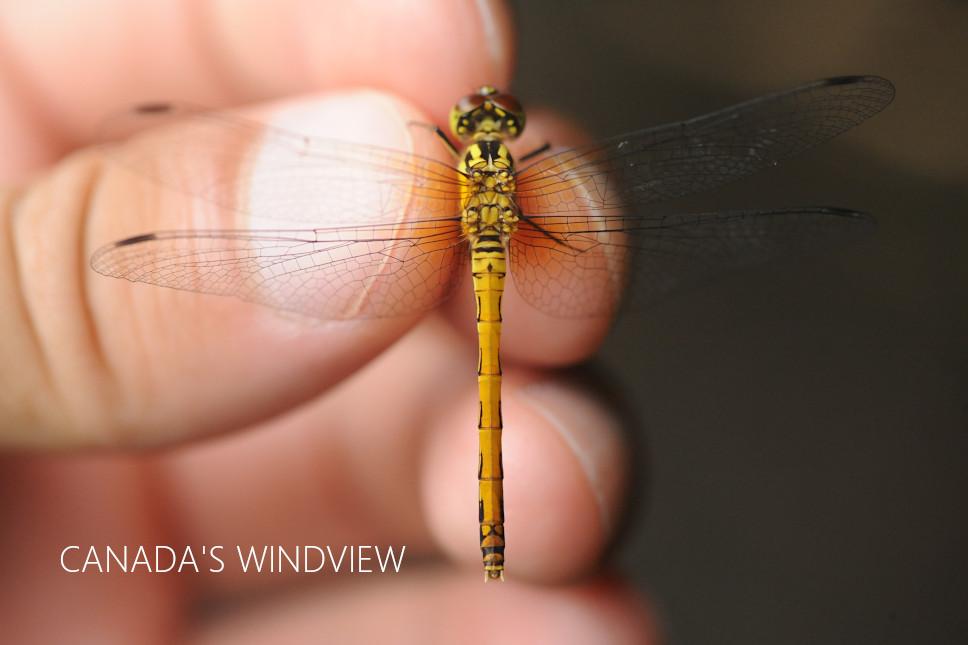 f:id:windview_canada:20210817200711j:plain
