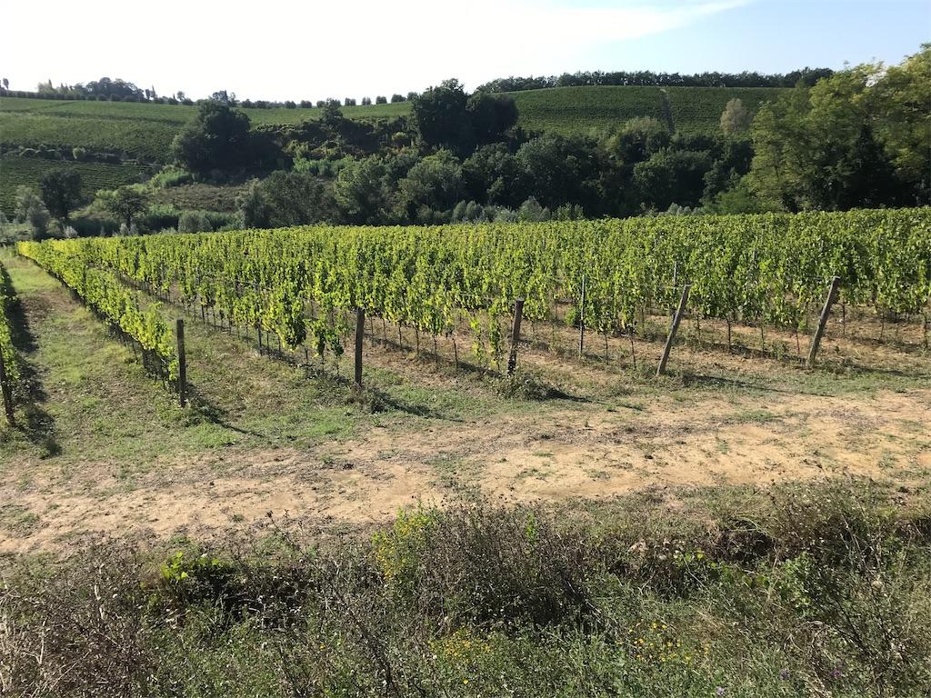 f:id:winelovers2050:20200426180722j:image