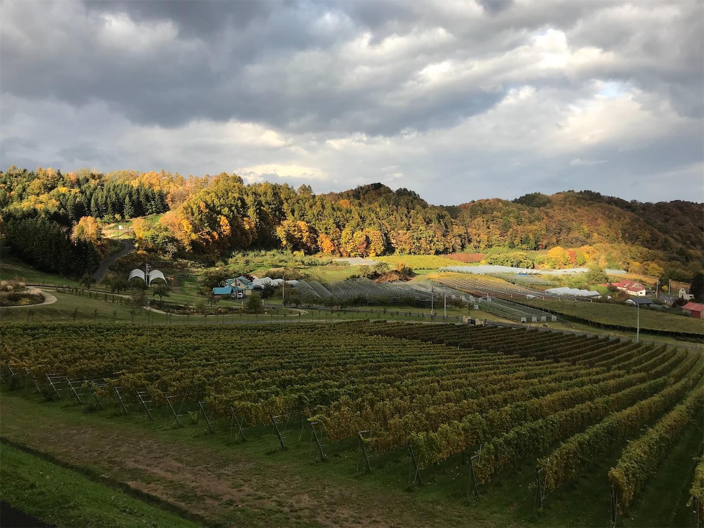 f:id:winelovers2050:20201029162119j:image