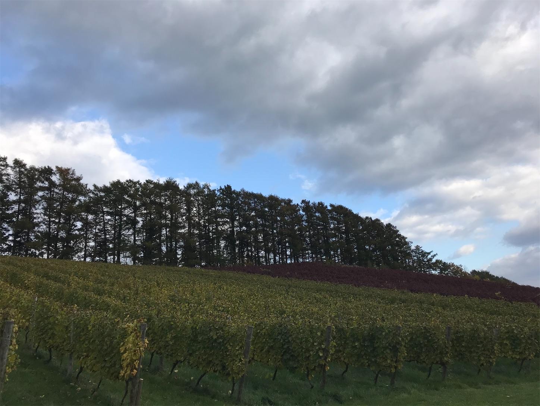 f:id:winelovers2050:20201029162706j:image