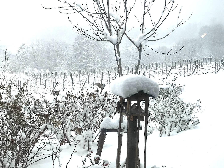 f:id:winelovers2050:20201225223815j:image
