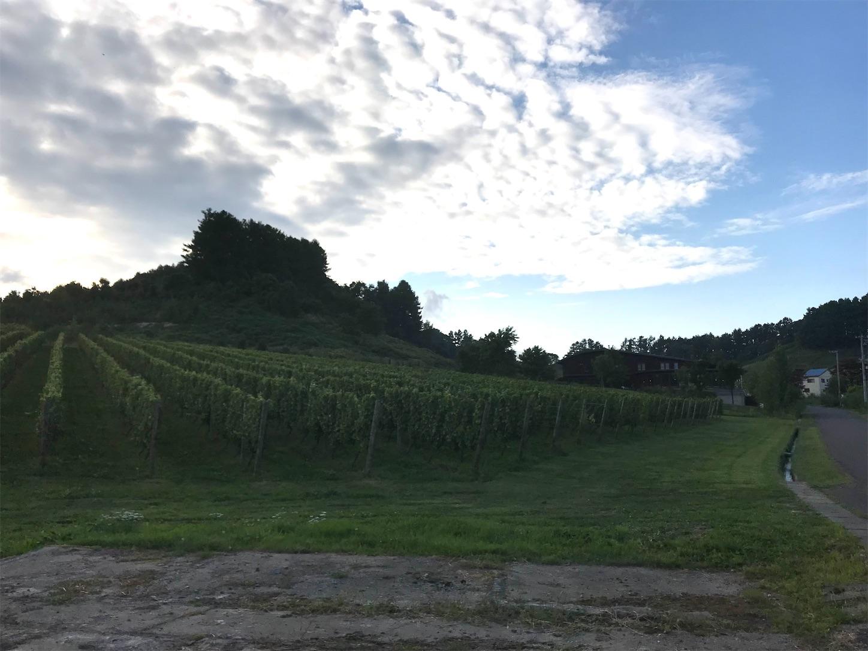 f:id:winelovers2050:20210905202413j:image