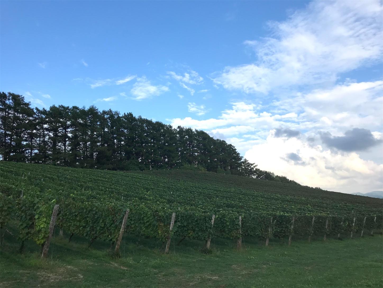 f:id:winelovers2050:20210905202512j:image