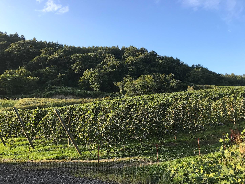 f:id:winelovers2050:20210905202517j:image