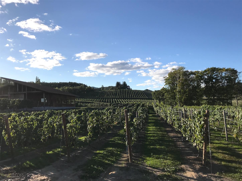 f:id:winelovers2050:20210915215505j:image