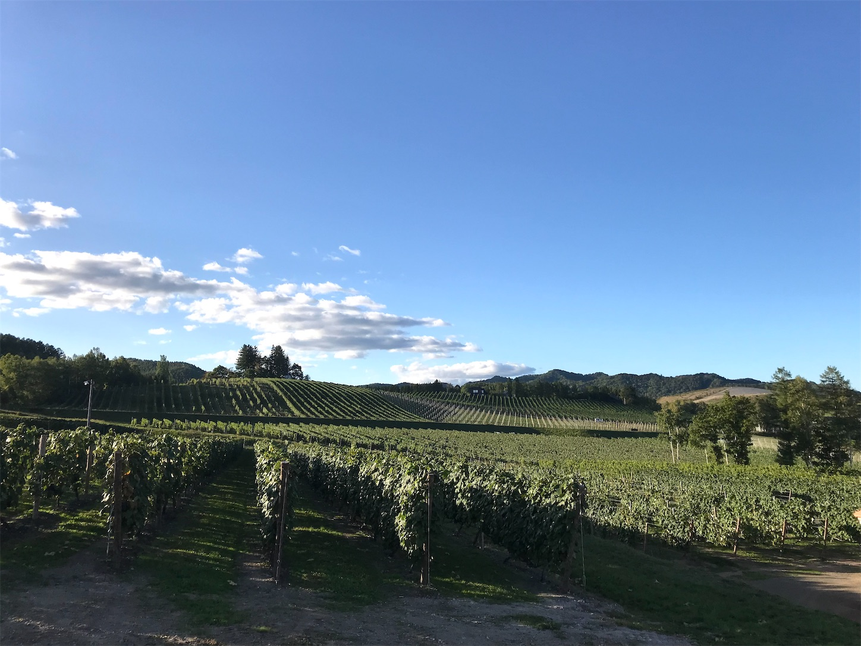 f:id:winelovers2050:20210919210554j:image