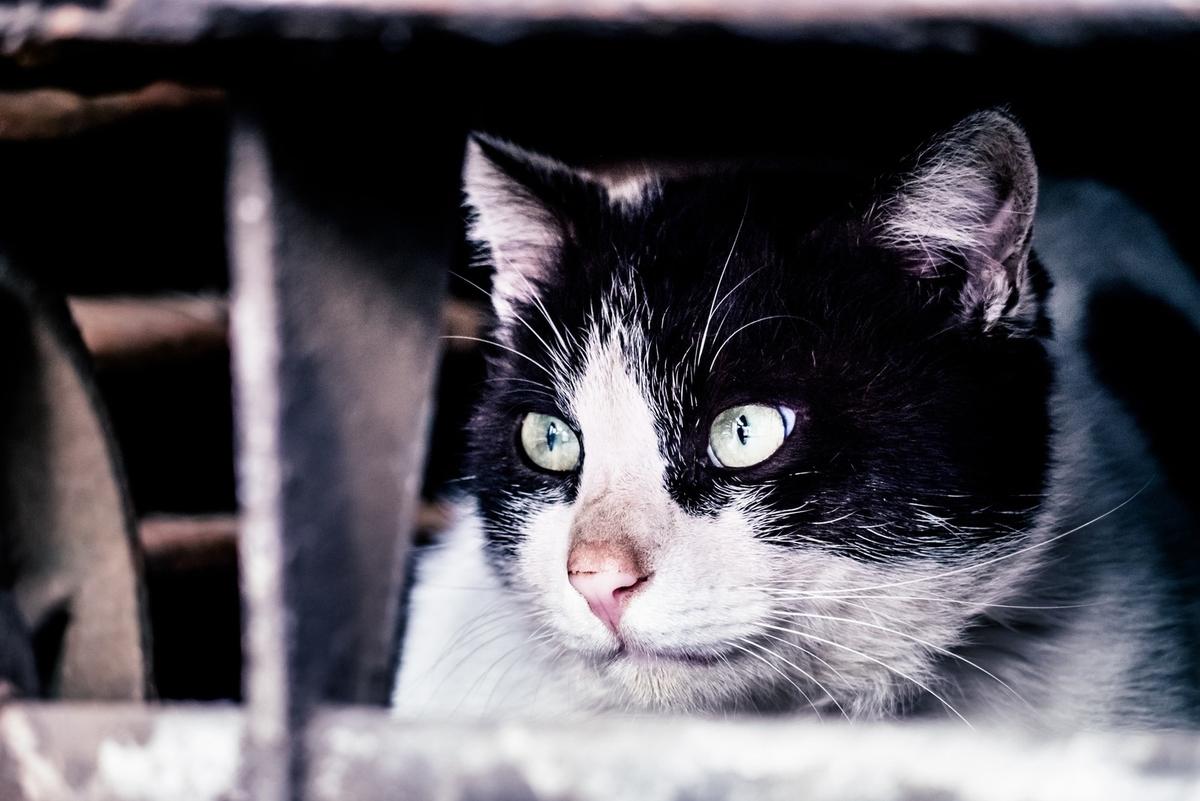 猫「すべて計画通り」のフリー画像(写真)