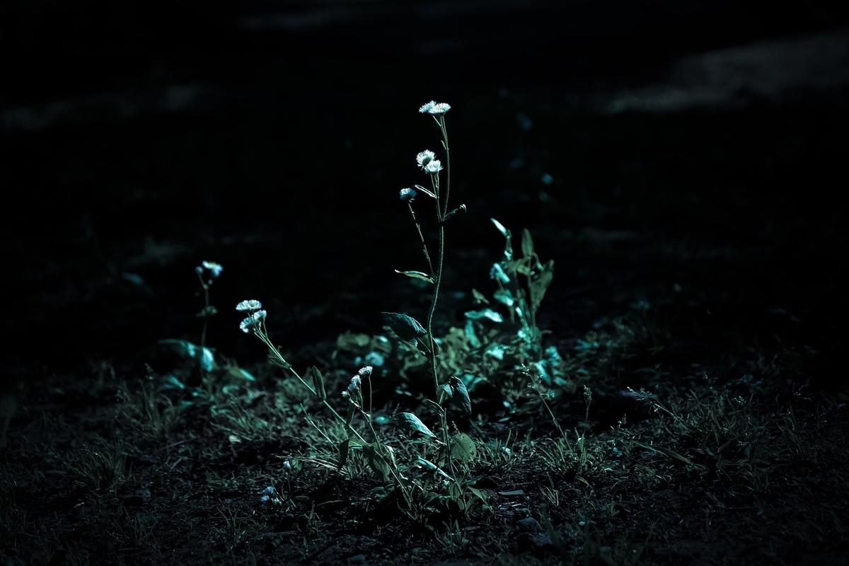 暗闇と路肩の雑草のフリー画像(写真)