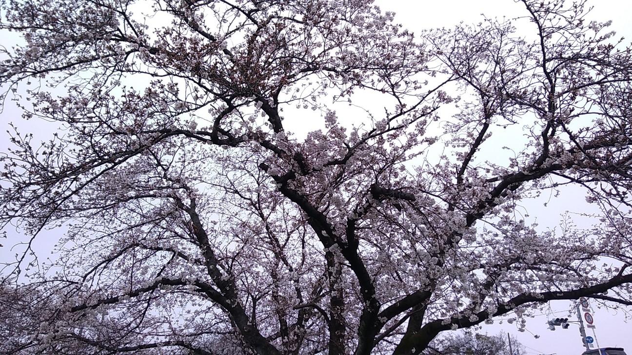 f:id:wing7kanzuki:20200401120848j:image