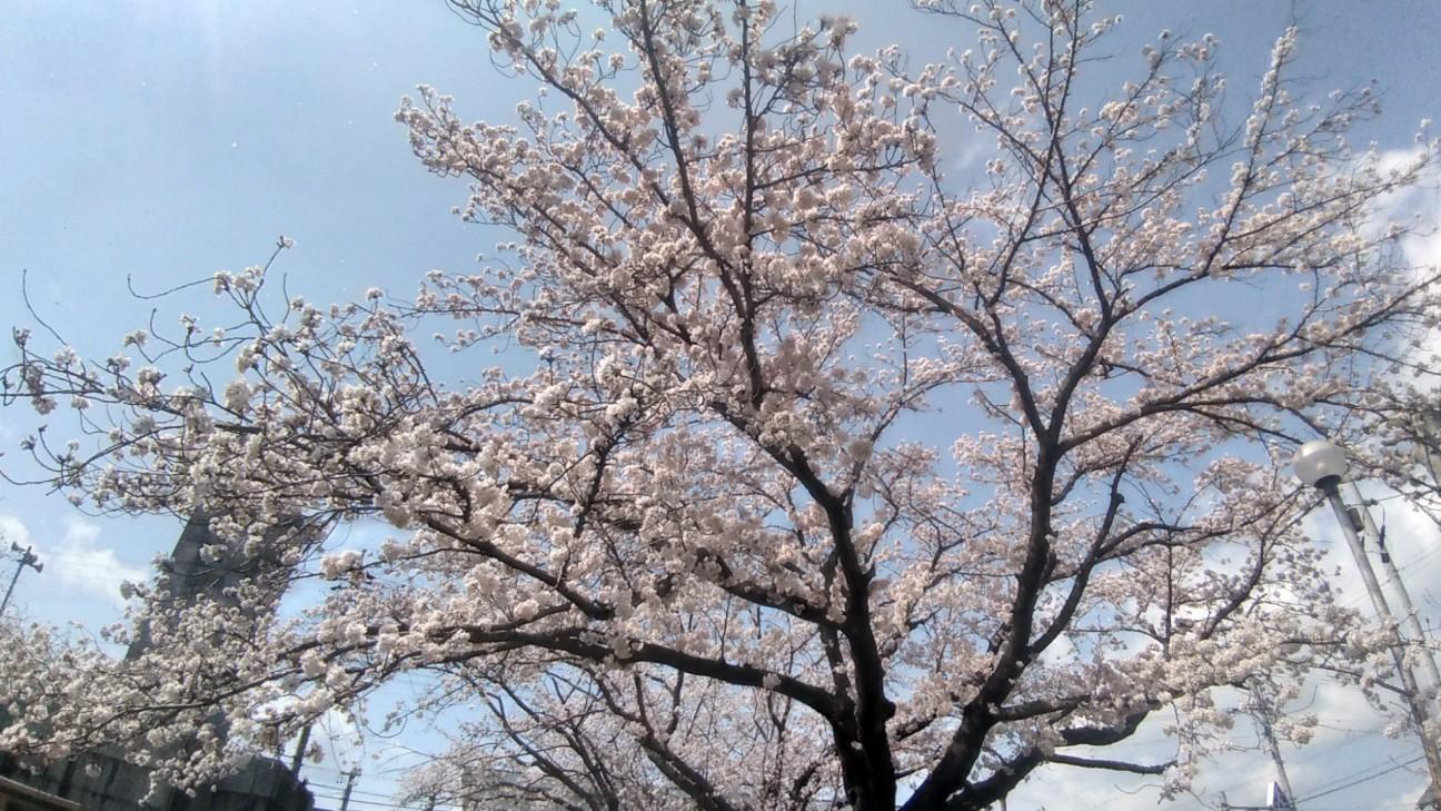 f:id:wing7kanzuki:20200402131037j:image