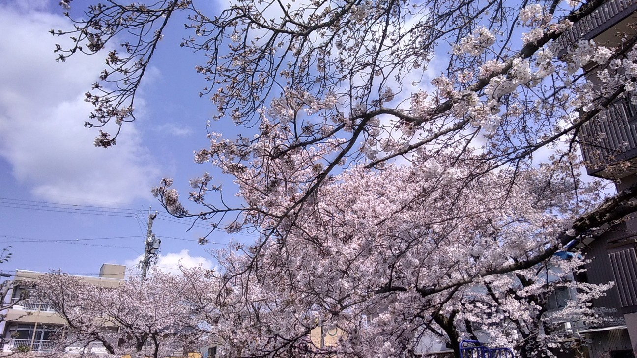 f:id:wing7kanzuki:20200402131255j:image