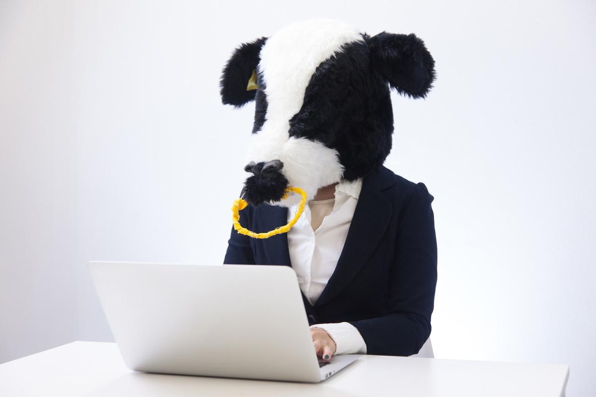 経理担当エト牛のフリー画像(写真)