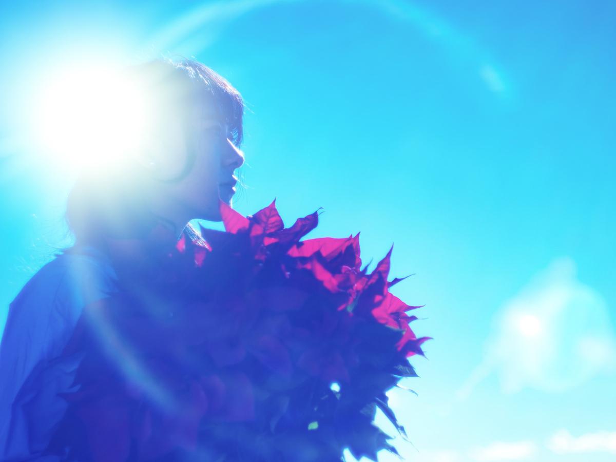 逆光とポインセチアを持った女性の横顔のフリー素材(写真)