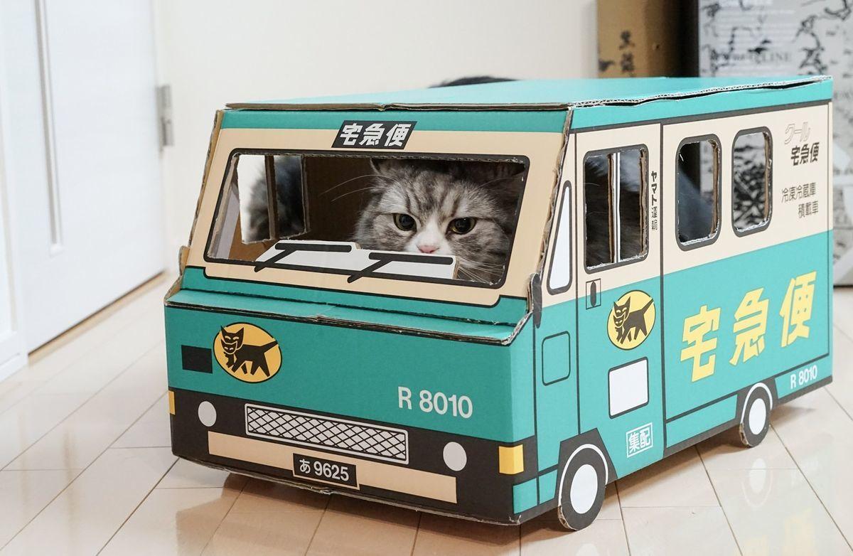 荷物をお届けにあがりましたー(猫)の写真素材