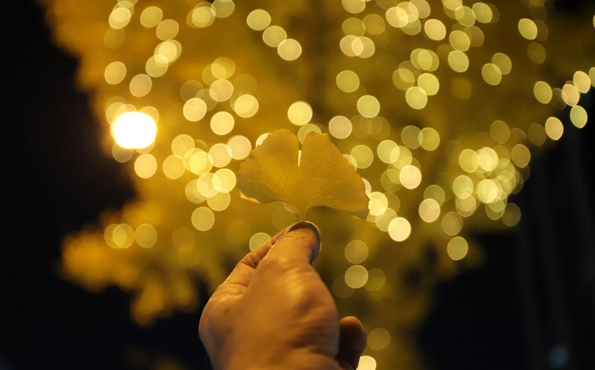 握りしめたイチョウの葉とイルミネーションの写真素材