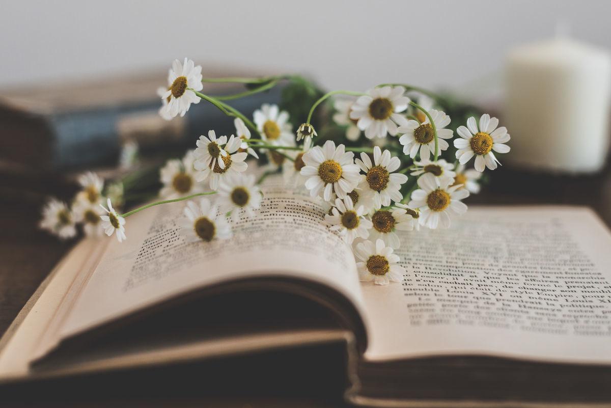 読みかけの本の上に置かれた花の写真素材