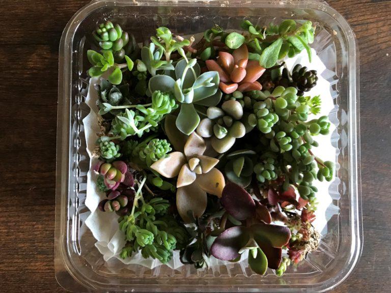 多肉植物盛り合わせ