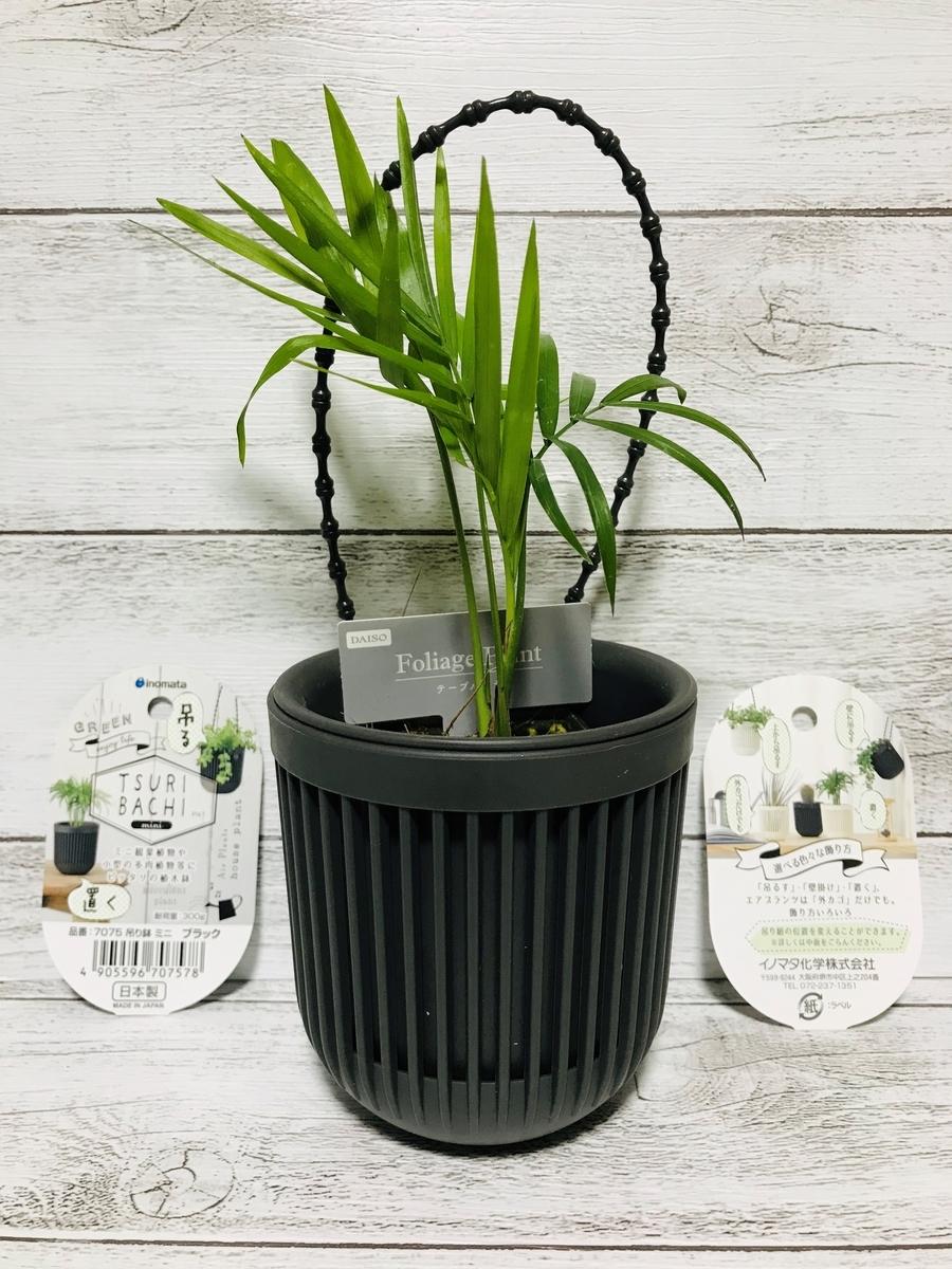 ダイソーの観葉植物テーブルヤシと吊り鉢ミニ