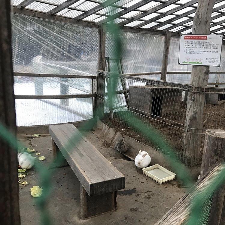 観光農園アグリの里おいらせのうさぎ