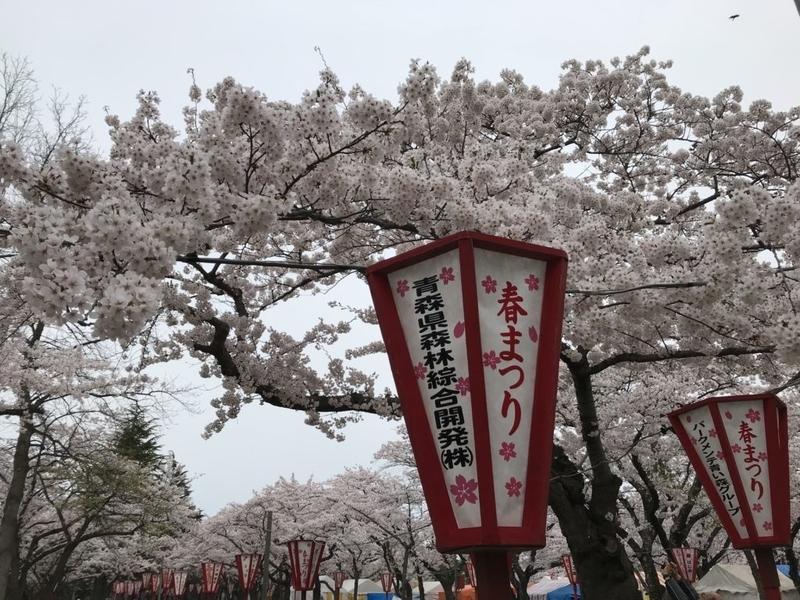青森市、合浦公園の桜