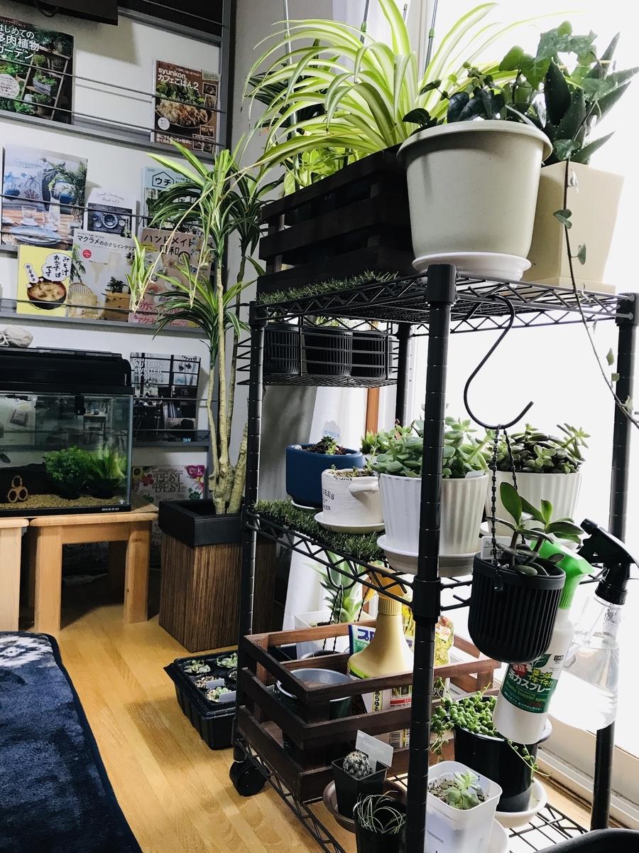 冬の室内の植物