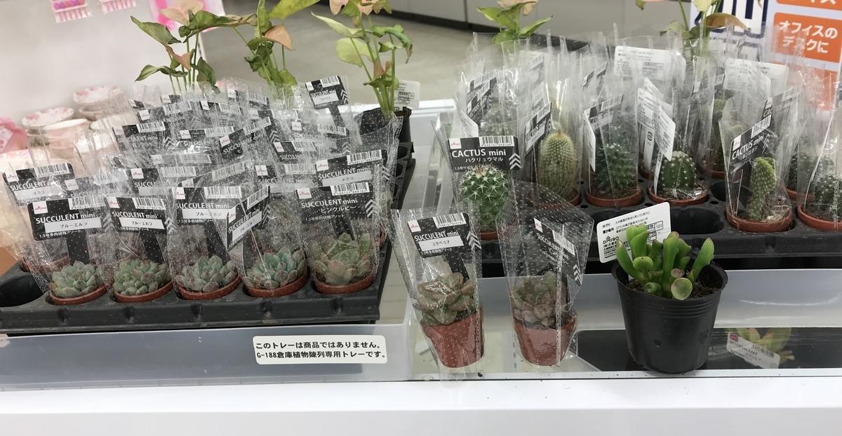 ダイソー店頭の多肉植物