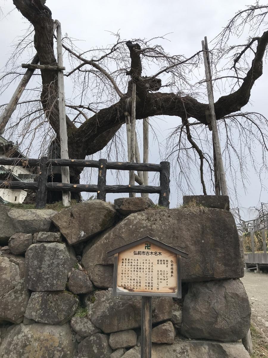 弘前市古木名木