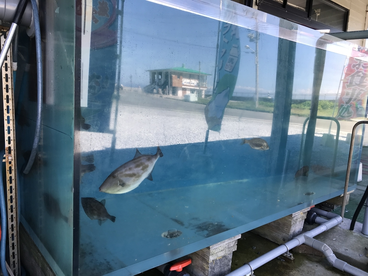 魚喰いの大間んぞくの水槽