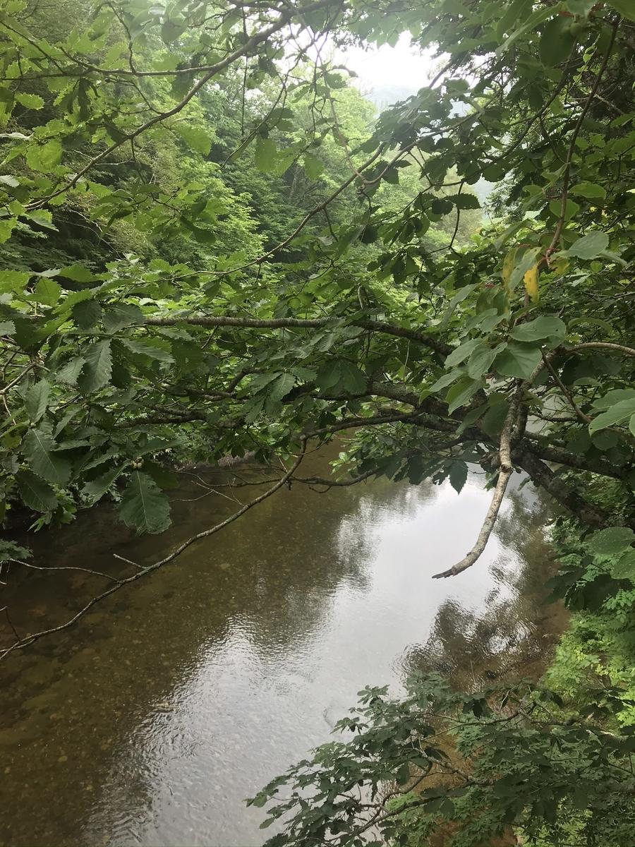 大畑町、奥薬研橋の川