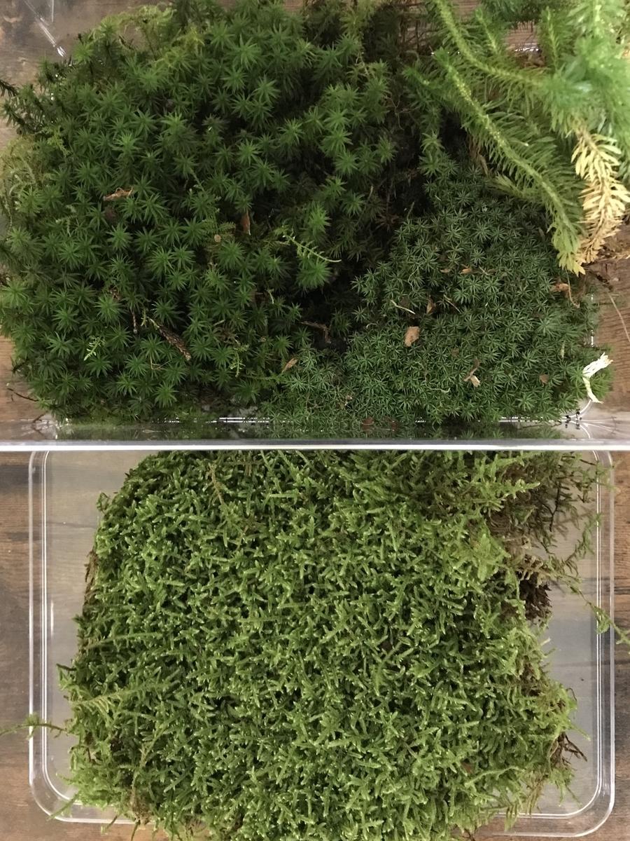 大量の苔(こけ)