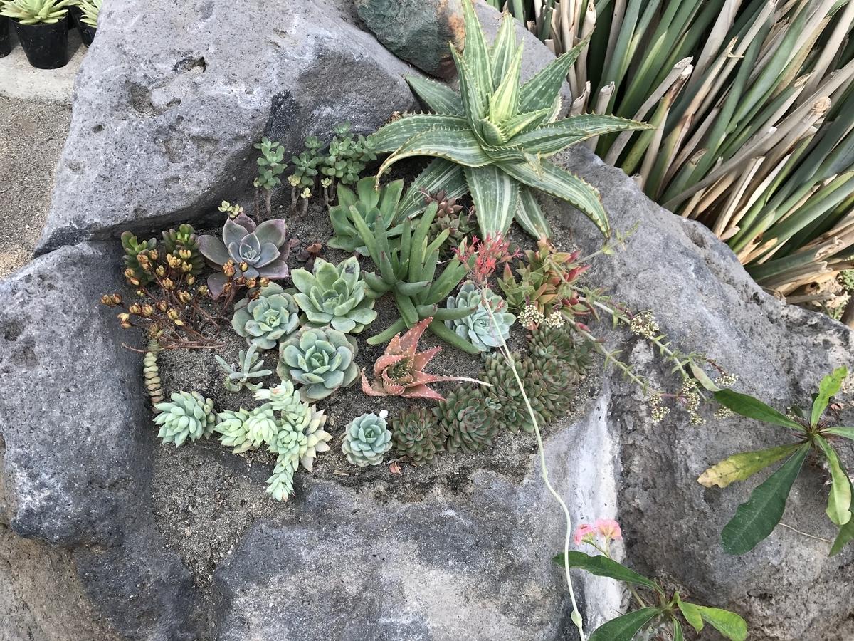 青森県平内町、サボテン公園の多肉植物