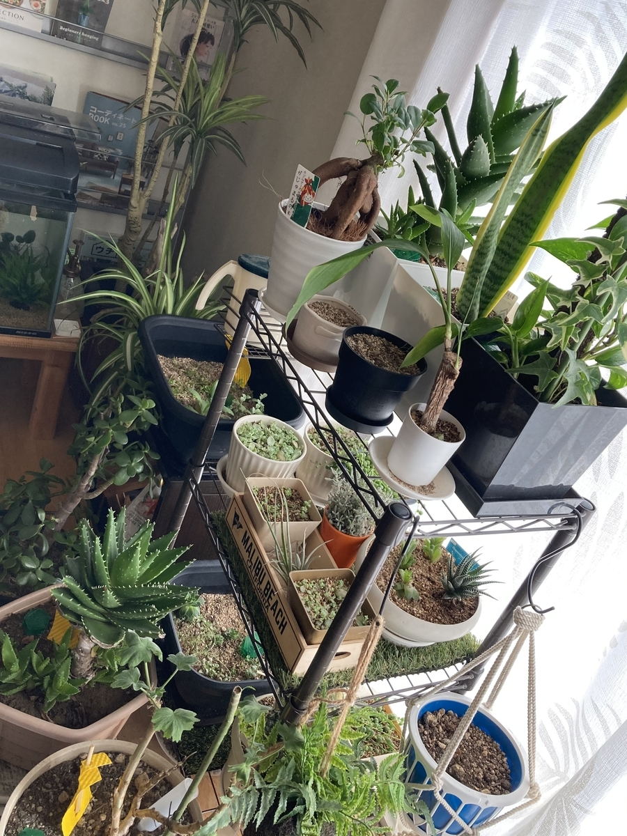 冬の室内の観葉植物