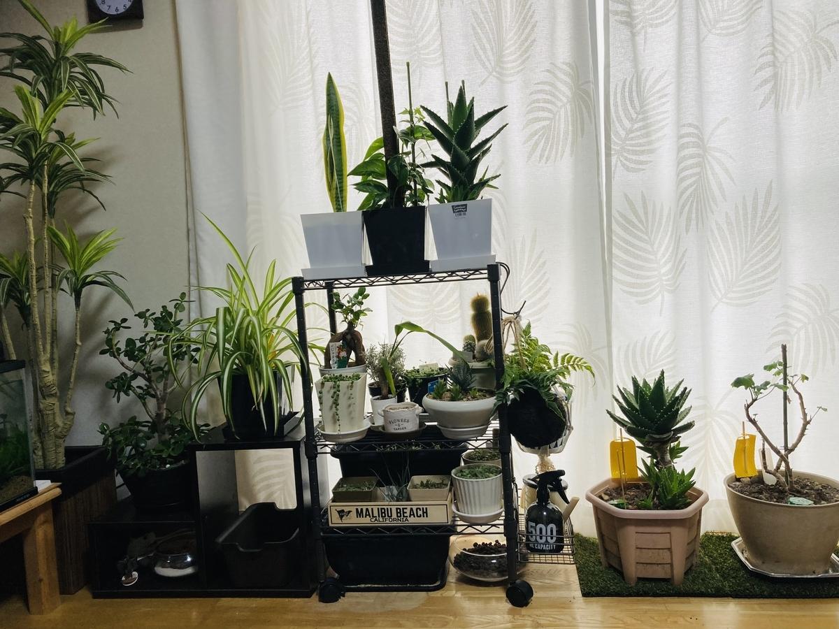 室内、北の冬の観葉植物