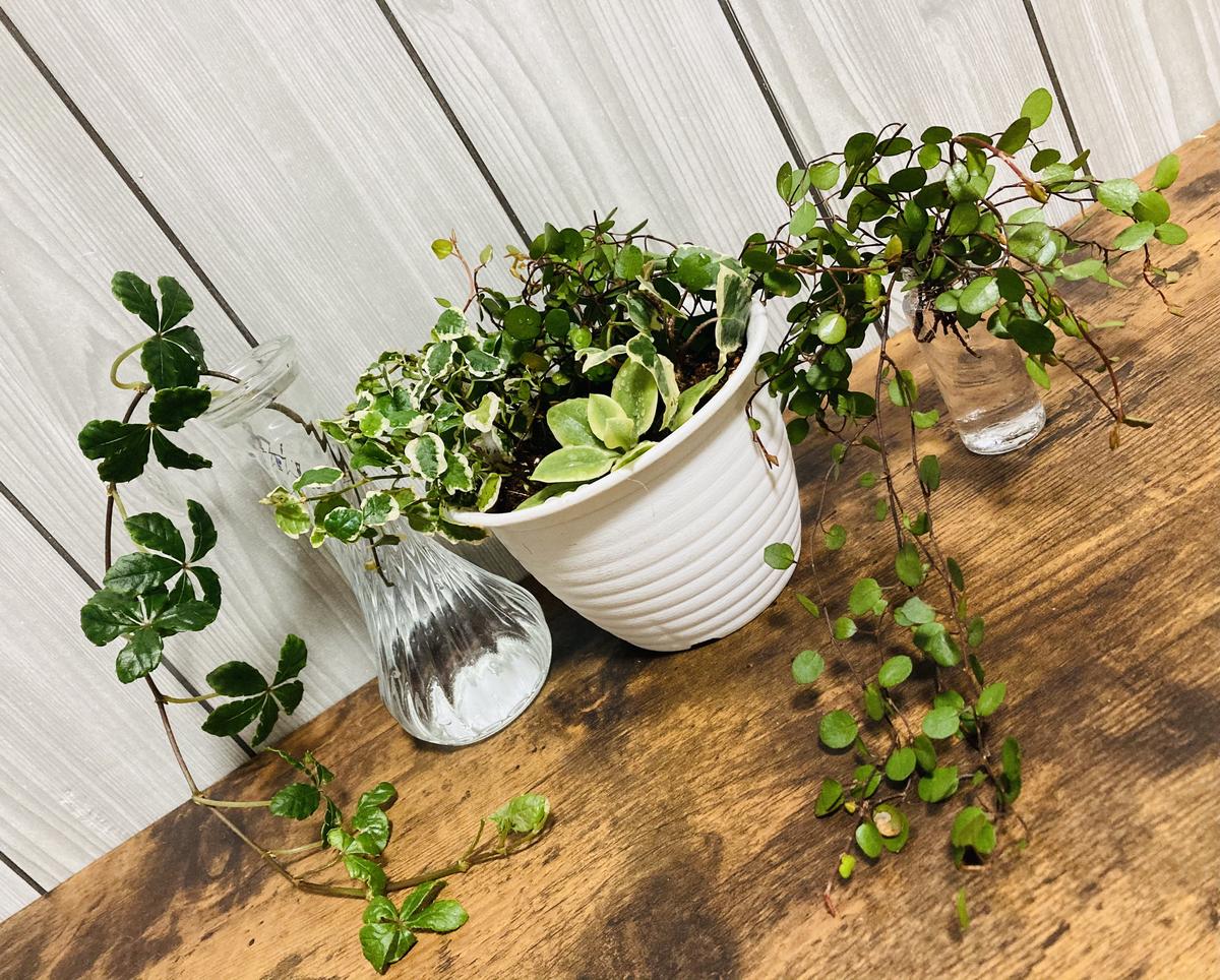 観葉植物5点セット